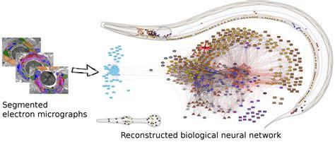 elegans wiring project     elegans