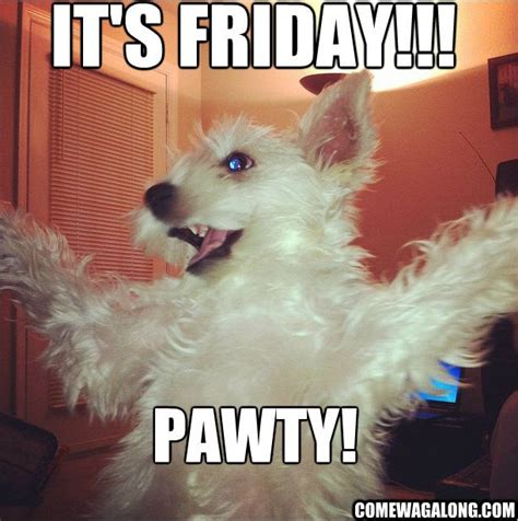 Dog Friday Meme - tgif happy friday come wag along