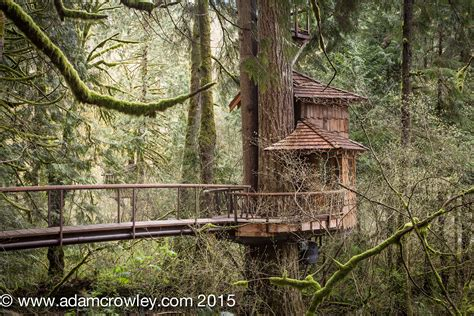tree house point treehouse point
