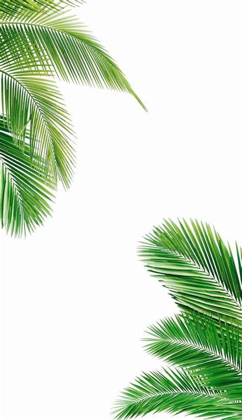 palm tree wallpaper best 25 palm tree leaves ideas on palm palm