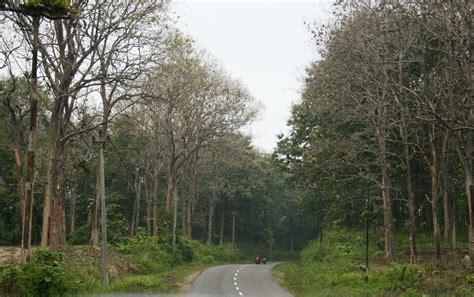 wallpaper alam hutan gambar 5 hutan indah dunia temukan berguna sisanya liar