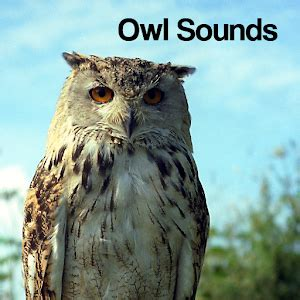 owl sounds android apps on google play