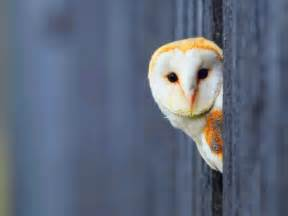 beautiful images owl hd wallpapers desktop pictures one hd wallpaper