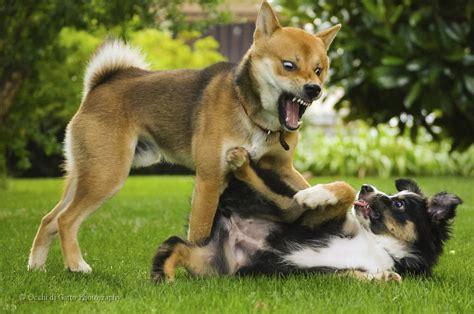 cani da casa addestramento cani aree cani e socializzazione perch 233