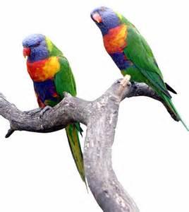Just Home Decor montecasino bird gardens leisure options