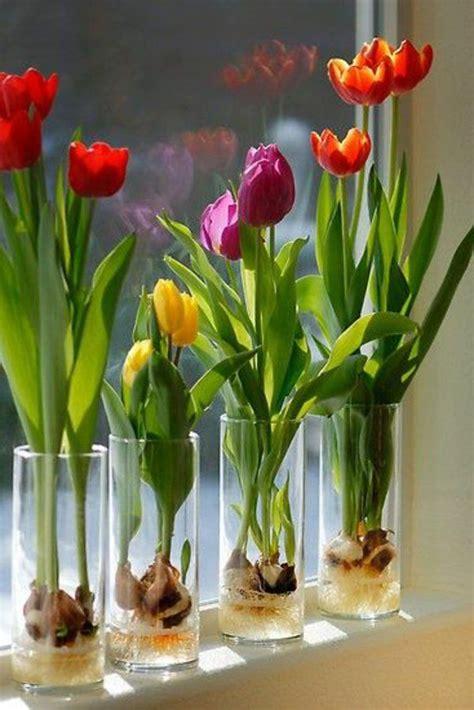 die fensterbank die besten 17 ideen zu tulpen pflanzen auf