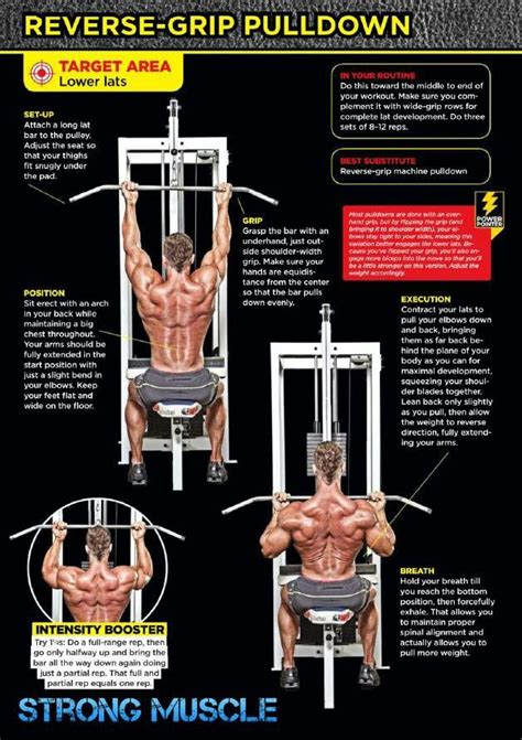 lower lats exercises fichas ejercicios