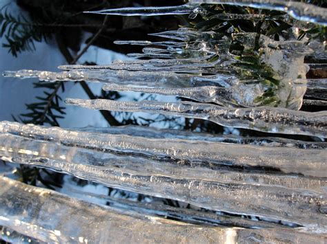 Tree Icicles - winter all i ve got is a photograph