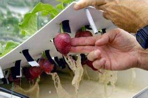 hydroponics  simple introduction