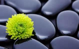 Pretty Flowers In French - flower fonds d 233 cran arri 232 res plan 2560x1600 id 504277