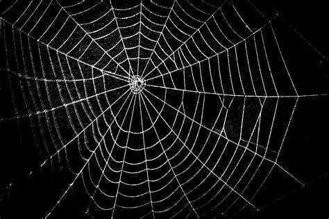 spider web    fun