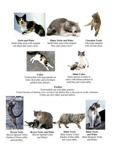 types of cat coloring cat colors and markings