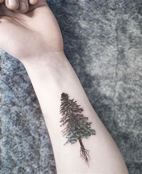 evergreen tree tattoo black evergreen tree tattoos