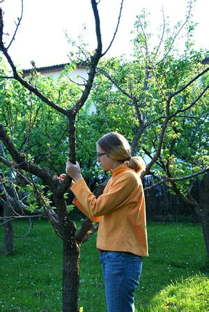 route mulberry tree st marcel les sauzet a7 exit 17 montelimar north dinner