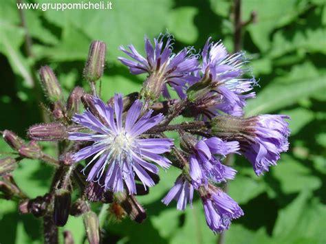 fiore con a galleria delle piante e fiori