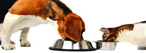 dog wont eat out of bowl the whole pet diet