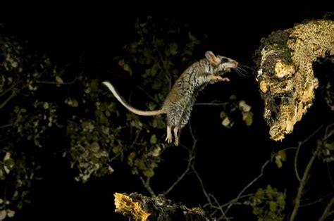 imagenes graciosas animales movimiento imagenes animales movimiento imagui