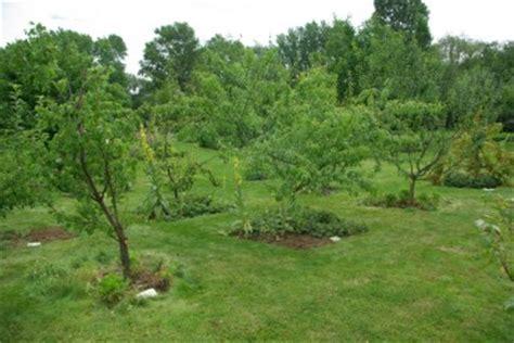 kleine bäume vorgarten 370 tourisme vert a mulhouse parc floral chambres d ha tes