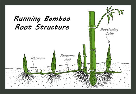 fighting architecture and design erosion plant bamboo to fight climate change bamboo architecture