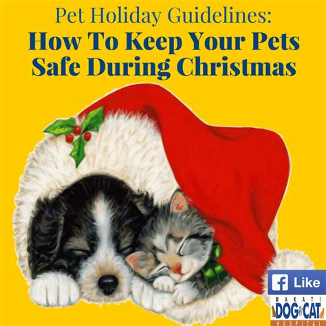 How To Keep Pets by Pet Guidelines How To Keep Your Pets Safe During