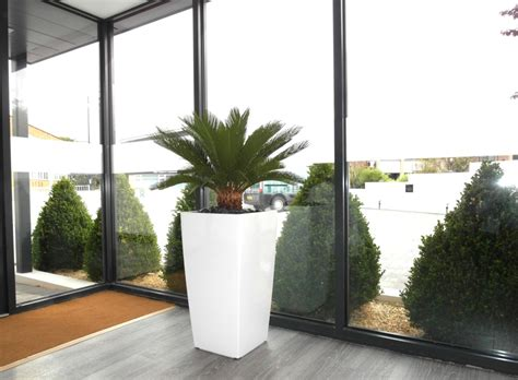 contemporary interior planting green plants white
