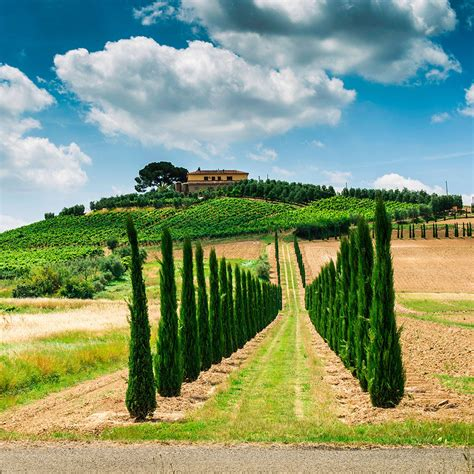 best wine in tuscany best wine country drives in tuscany travel leisure