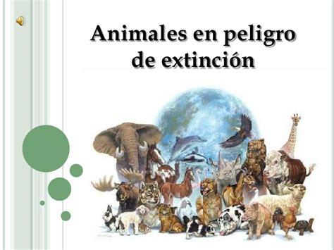 imagenes de animales en peligro de extincin 07 view image proyecto animales en peligro de extincion cyndi didier