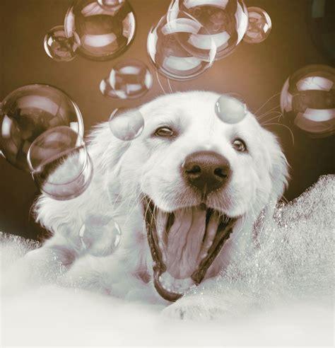 pet bathtubs pin by deb davidson on pup stuff pinterest the bubble
