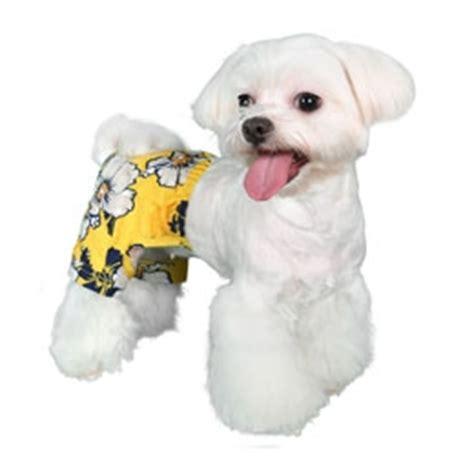 puppy bathing suits aruba swim trunk swimsuits swimwear bowwowsbest swimsuits