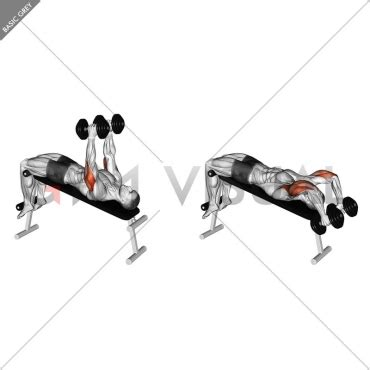 decline bench triceps extension dumbbell decline triceps extension gym visual
