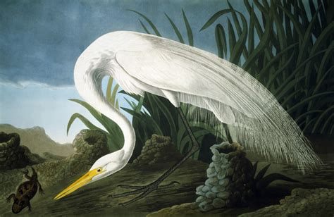 rare bird john james audubon and contemporary art