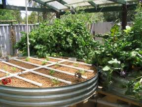 backyard aquaponics basics create a sustainable food