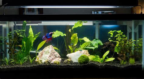 20 gallon planter 20 gallon planted tank the planted tank forum
