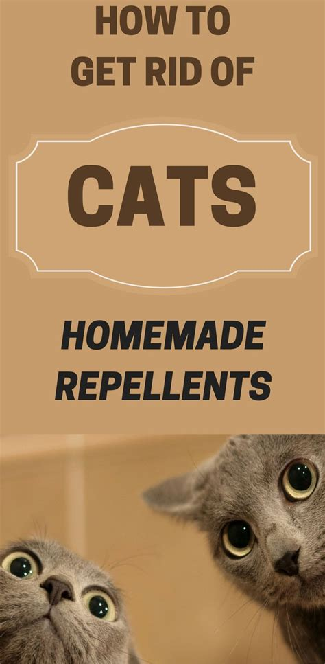 how to get rid of cats in your backyard 1047 best house cleaning images on pinterest cleaning