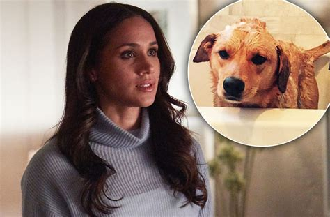 meghan markle dogs meghan markle leaves beloved as she prepares for royal in u k wstale