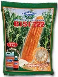 Bibit Jagung Hibrida Bisi 222 jagung hibrida budidaya jagung hibrida