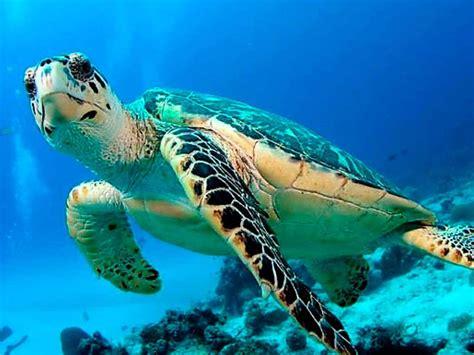 imagenes de animales de mexico d 243 nde ver animales en peligro de extinci 243 n en m 233 xico