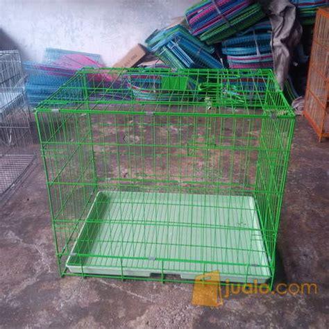 makanan rumah untuk anak kucing kandang anjing kucing medan jualo