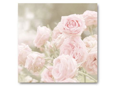pink rose photography shabby chic baby pink roses soft
