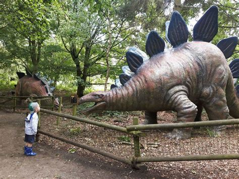 top  dinosaur days   toddlers kiddieholidays
