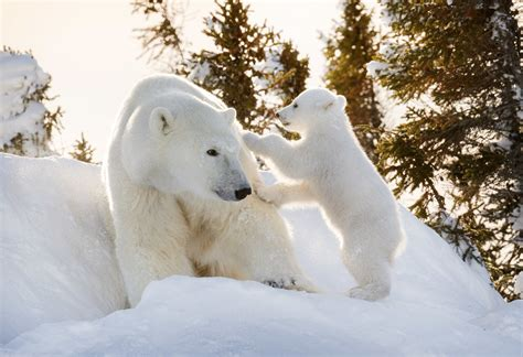 polar petting this polar petting a is enough to melt any icy e magazine the