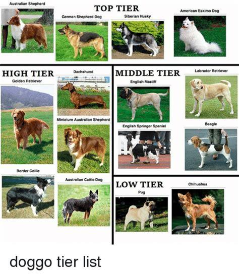 Mba From Middle Tier Vs Top Tier by Australian Shepherd Top Tier American Eskimo Siberian