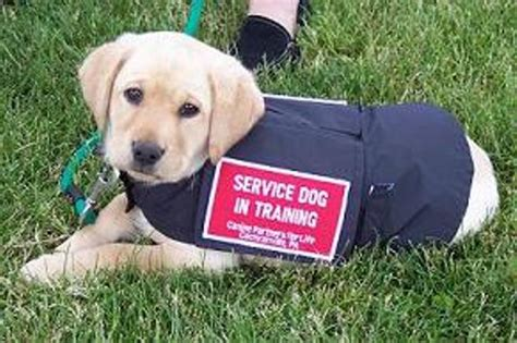 How Do Dogs Help Blind People How Can Service Dogs Help Parkinson S Pdcommunity