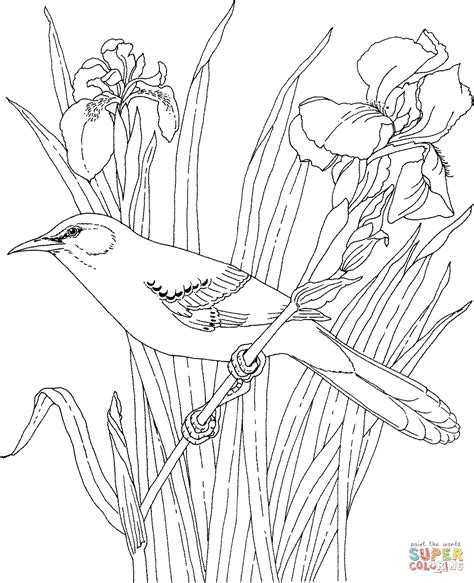 printable coloring pages of birds and flowers mockingbird and iris tennessee state bird and flower