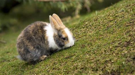 conejo de fuego 2016 conejos archives animal mascota