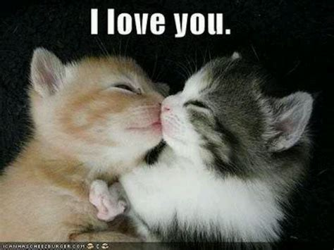 Cute I Love You Meme - cute animal i love you meme www imgkid com the image