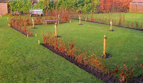 beukenhaag dubbele rij groene beukenhaag fagus sylvatica kopen tuincentrum nl