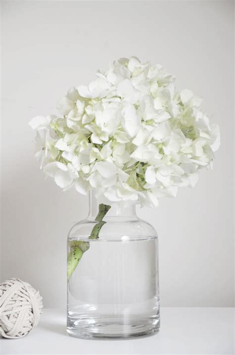 Can You Cut Hydrangeas For A Vase by 25 Best Ideas About White Gardens On Snowball