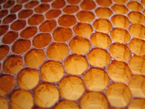 patterns in nature honeycomb honeycomb macro of a honeycomb taken with a plain old
