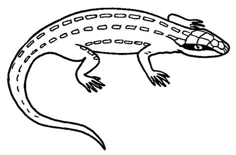 draco lizard coloring pages draco lizard pages coloring pages